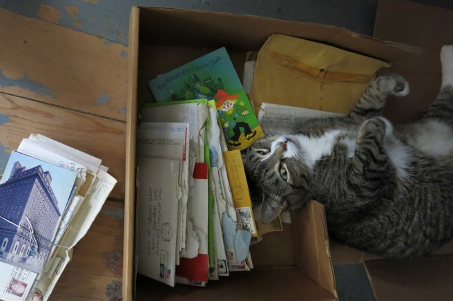Tizzy and letters